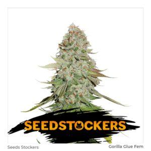 Seed Stockers – Gorilla Glue