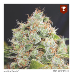 MEDICAL SEEDS – BCN Sour Diesel x3