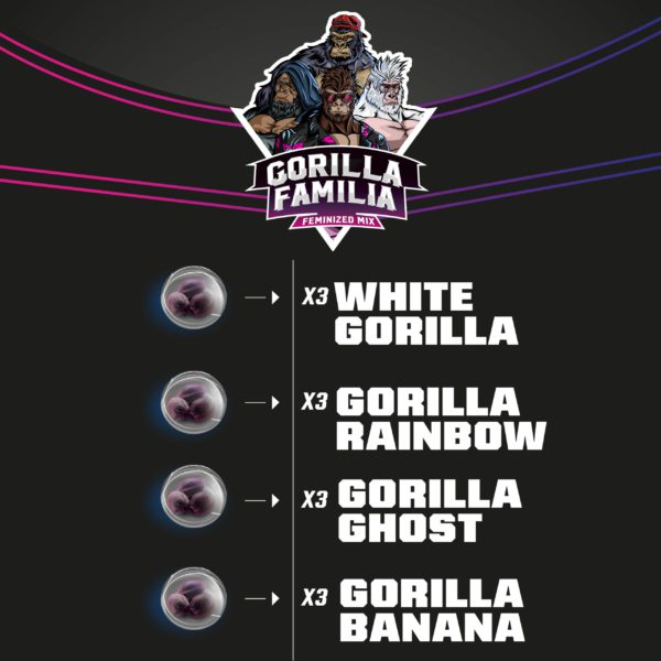 gorilla familia